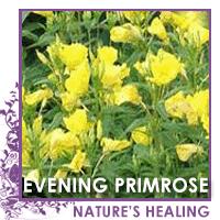 Eveningprimrose