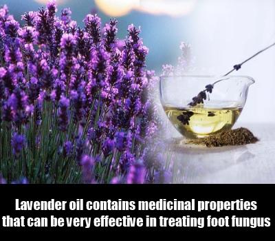 Lavender-Oil2